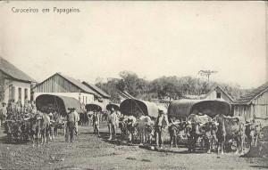 pr-palmeira-papagaios-300x191